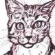 kittythumb